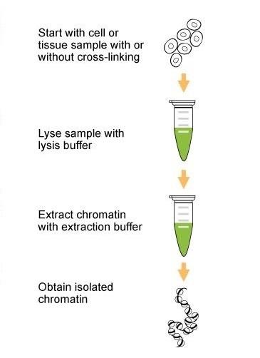 epigentek chromoplasts chromatin